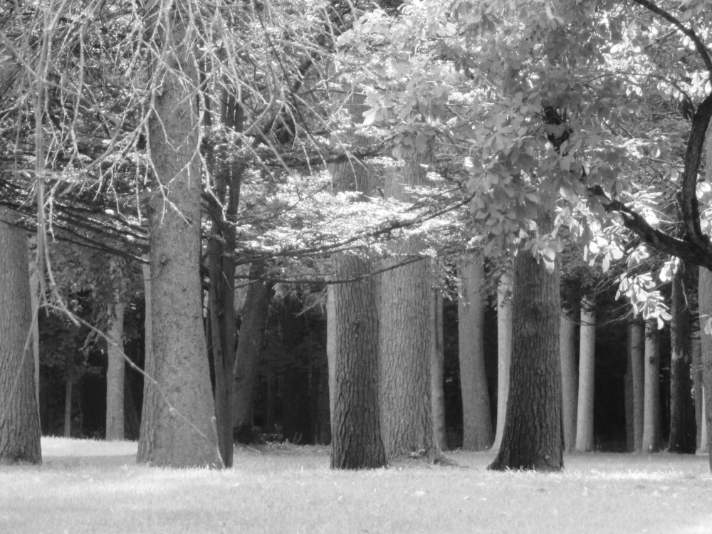 Spencer Trask's shadow lingers amongst the pines at Yaddo.