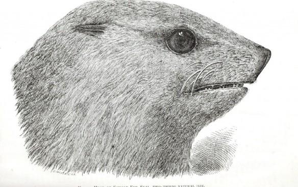 Animal-Animal-head-Sea-mammal-seal-head-1024x645