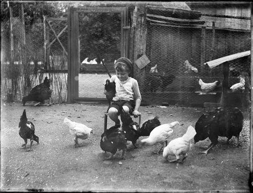 Chicken guarding courtesy of Pinterest