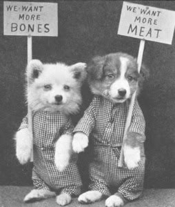 Dogs want their rights, too!