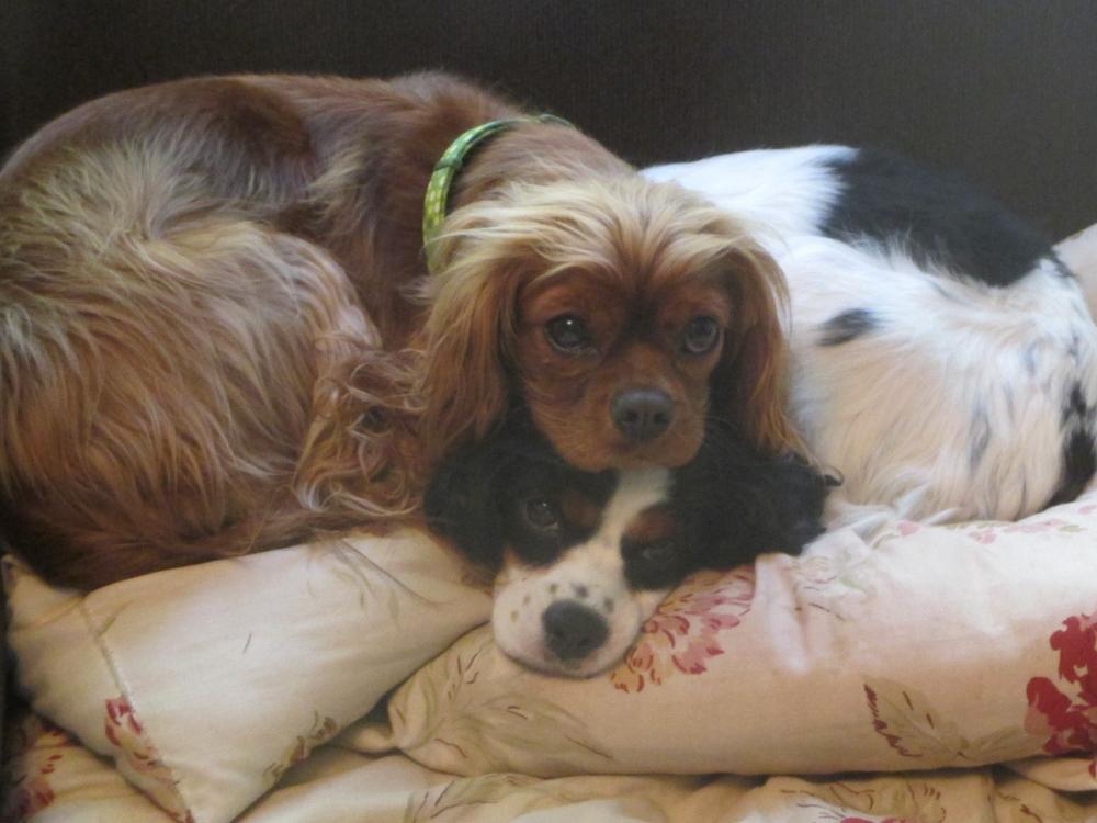 A writer's companions: Rosie & Daisy