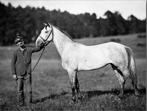 Civil War Horse who's probably in better shoes than his friend. courtesy Pinterest