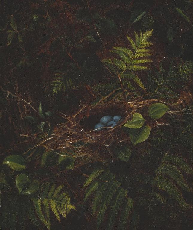 fidelia Bridges bird's nest and ferns