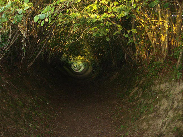 Some holloways are overgrown by the trees that border them