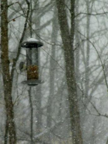 bird snow2