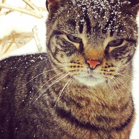 boris snow 2 11 20